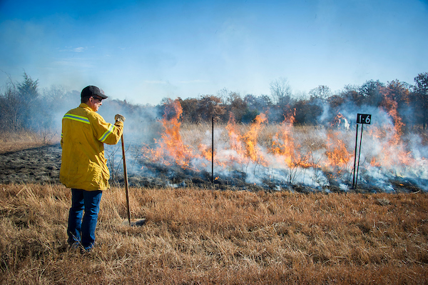 A firefighter supervising a prescribed burn.